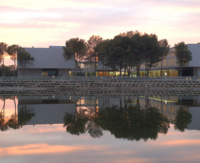 Betula Alba. Centre Residencial Almacelles.