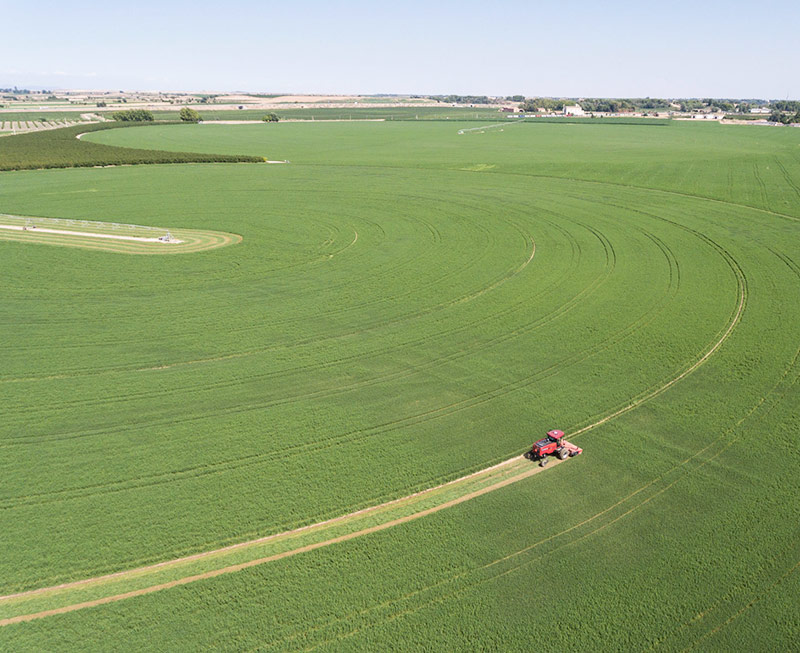 Fields. Alfalfa. Grupo Venso.