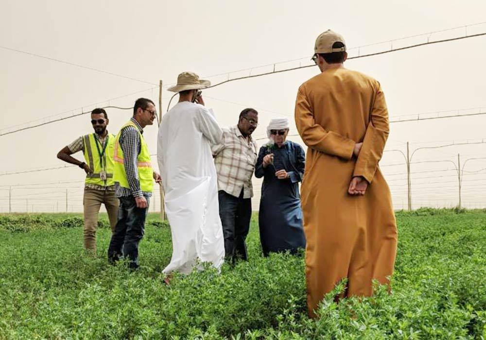 Grupo Venso visit Sudán. Alfalfa Spain.